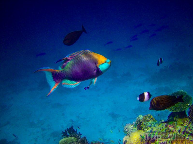 Fotka, Foto Podmořský život (Maledivy)