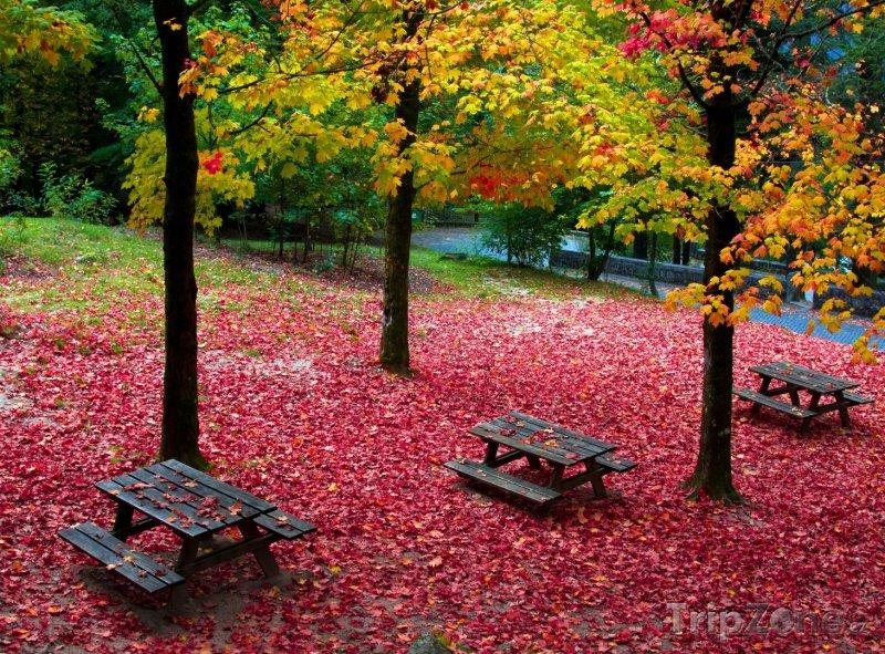 Fotka, Foto Podzim v Národním parku Peneda-Gerês (Portugalsko)