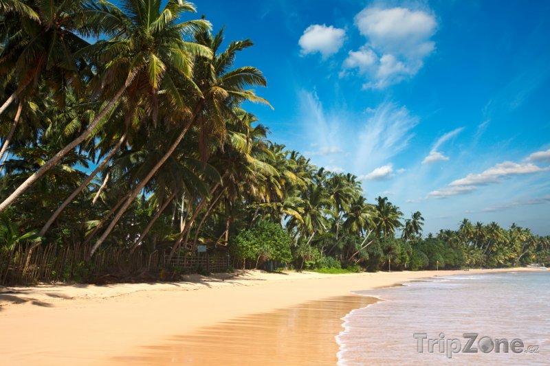 Fotka, Foto Pohádková pláž s palmami (Srí Lanka)