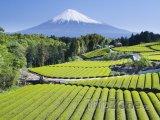 Pohled na horu Fudži