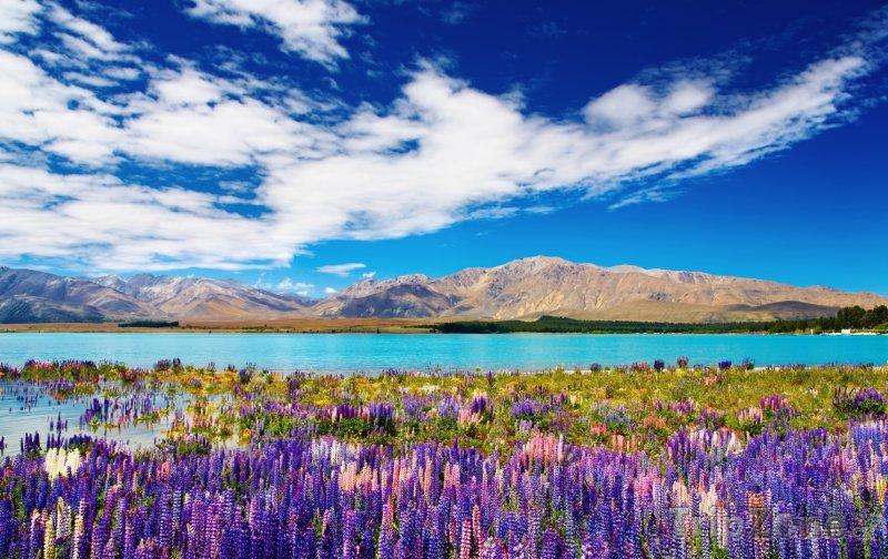 Fotka, Foto Pohled na jezero Tekapo v regionu Canterbury (Nový Zéland)