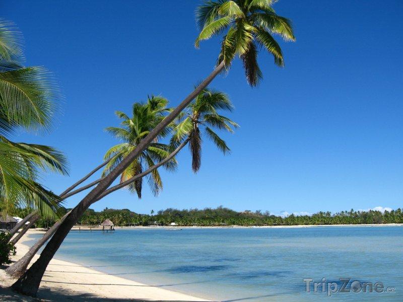 Fotka, Foto Poklidná zátoka s palmami (Fidži)