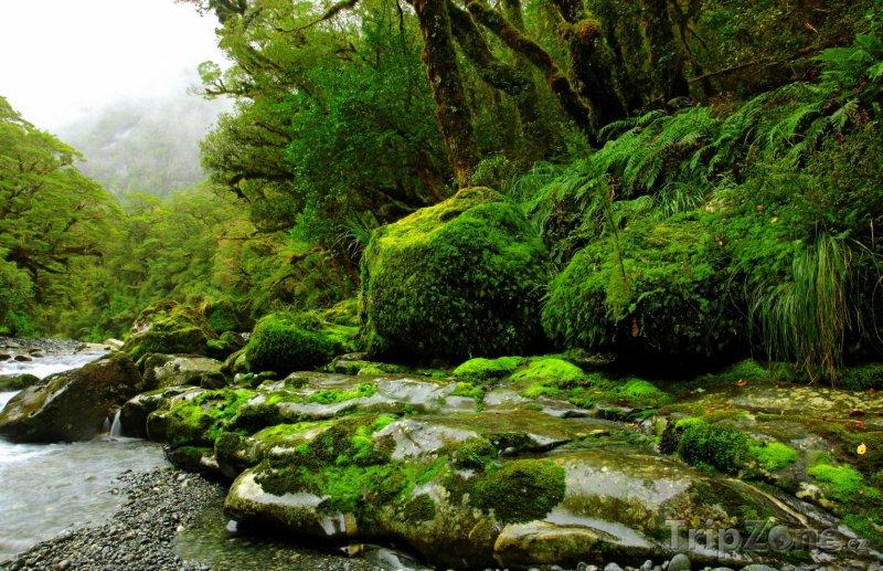 Fotka, Foto Potok v deštném lese (Nový Zéland)