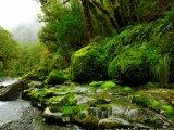 Potok v deštném lese