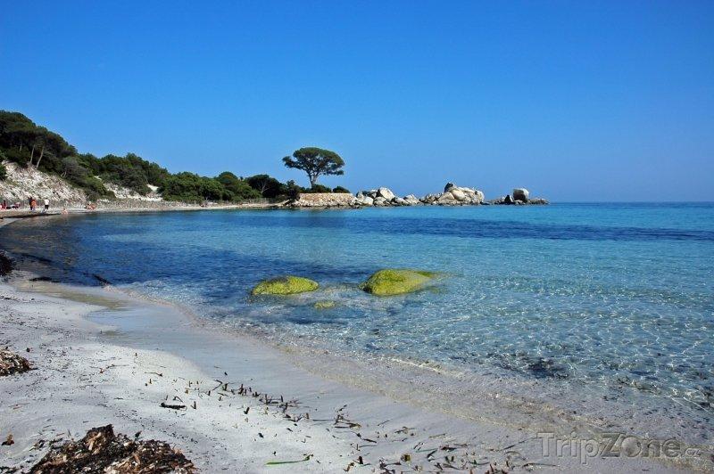 Fotka, Foto Překrásná pláž Palombaggia na Korsice (Francie)