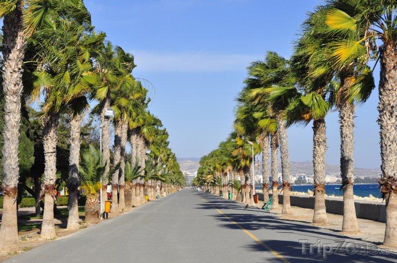 Fotka, Foto Promenáda s palmami - Limassol (Kypr)