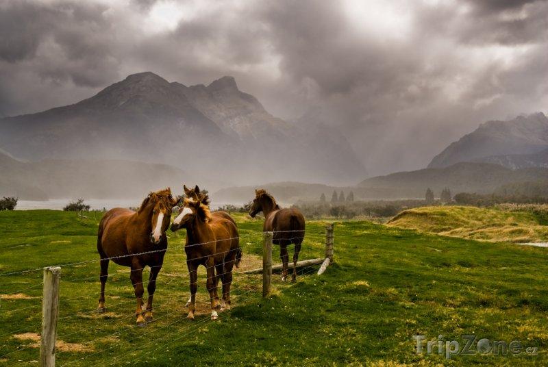 Fotka, Foto Region Taranaki a koně na louce (Nový Zéland)