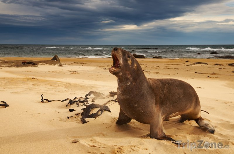Fotka, Foto Region Waikato a lvoun na pláži (Nový Zéland)