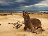 Region Waikato a lvoun na pláži