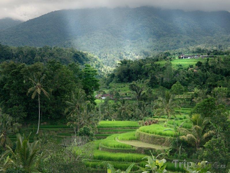 Fotka, Foto Rýžové terasy na ostrově Bali (Indonésie)
