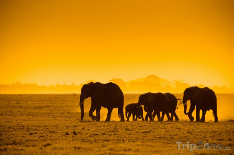 Fotka, Foto Siluety slonů v Národním parku Amboseli (Keňa)