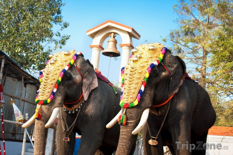 Fotka, Foto Sloni ve městě Kochi (stát Kerala) (Indie)