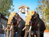 Sloni ve městě Kochi (stát Kerala)