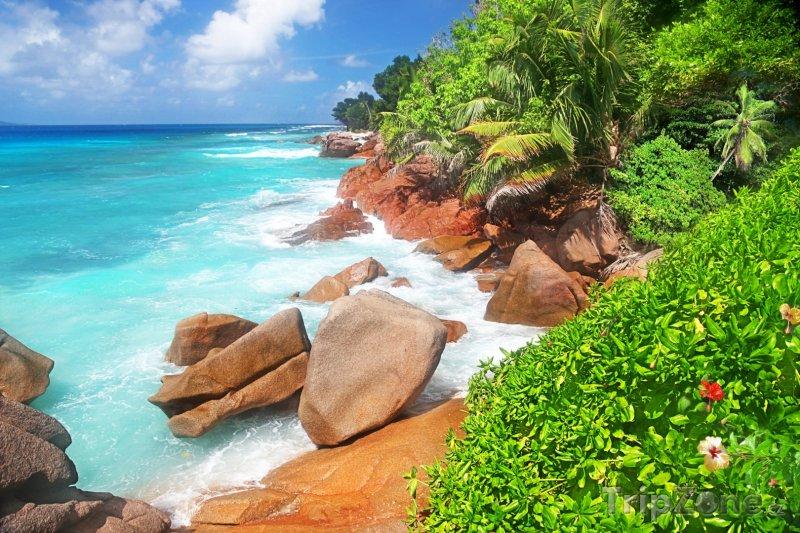 Fotka, Foto Soukromá pláž s ibišky a palmami (Seychely)