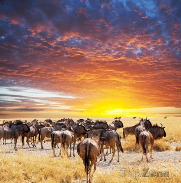 Fotka, Foto Stádo Pakoňů hřivnatých (Keňa)