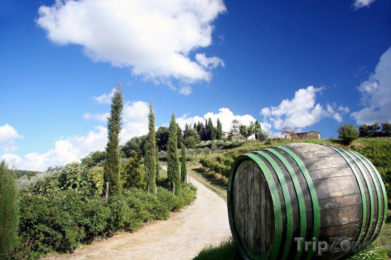 Fotka, Foto Toskánská vinice (Itálie)