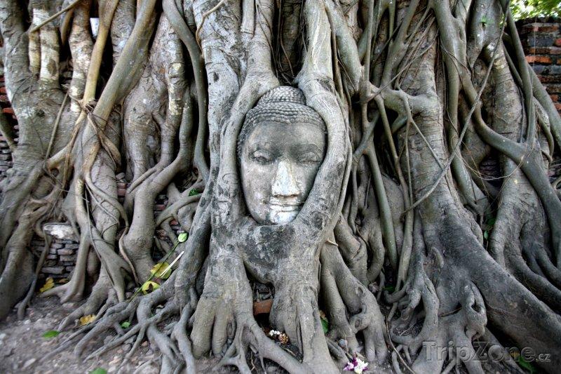 Fotka, Foto Tvář Budhy v památném městě Ayutthaya (Thajsko)