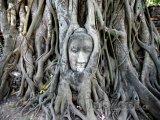 Tvář Budhy v památném městě Ayutthaya