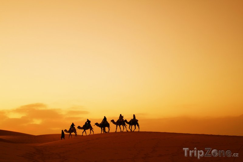 Fotka, Foto Velbloudi na dunách Sahary (Maroko)