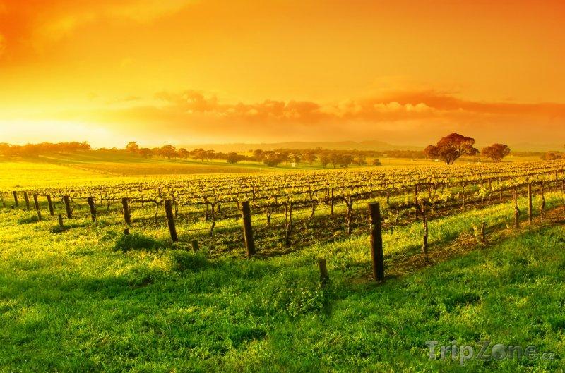 Fotka, Foto Vinice v Barossa Valley (Austrálie)