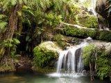 Vodopád v deštném pralese