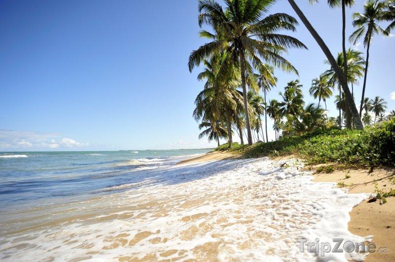 Fotka, Foto Bahia - pobřeží Praia do Forte (Brazílie)