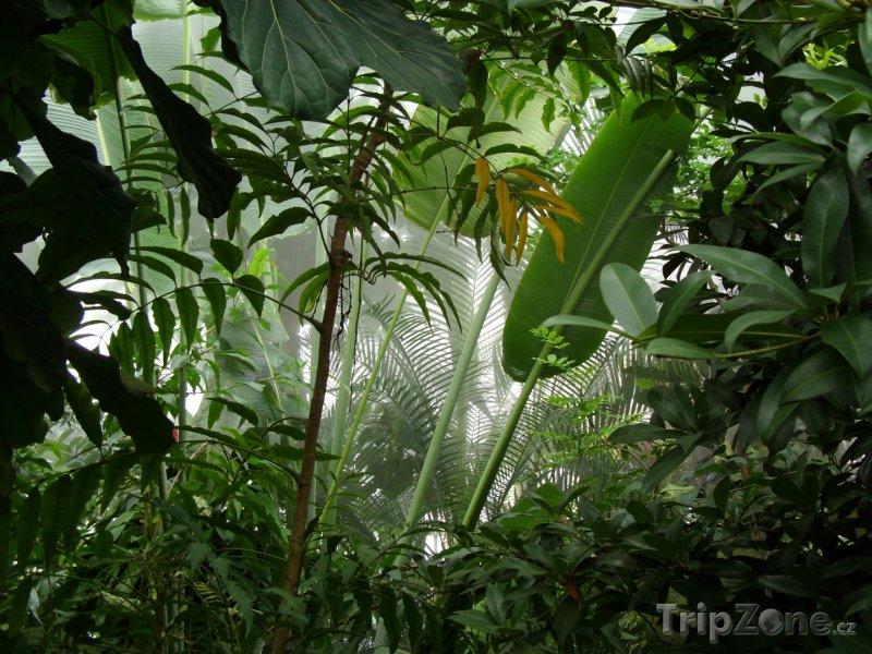 Fotka, Foto Deštný prales v Brazílii (Brazílie)