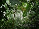 Deštný prales v Brazílii