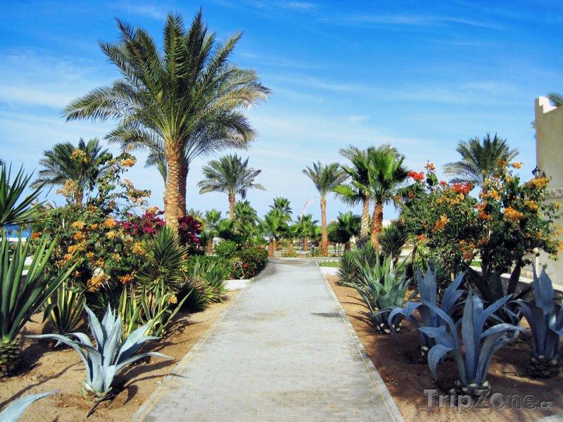 Fotka, Foto Hotelová zahrada (Hurghada, Egypt)