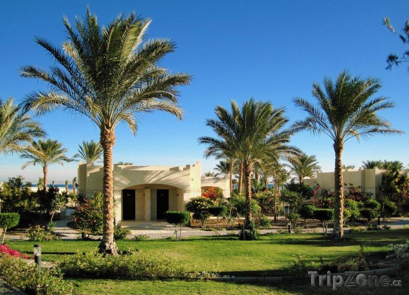 Fotka, Foto Palmy okolo turistických bungalovů (Hurghada, Egypt)