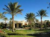 Palmy okolo turistických bungalovů