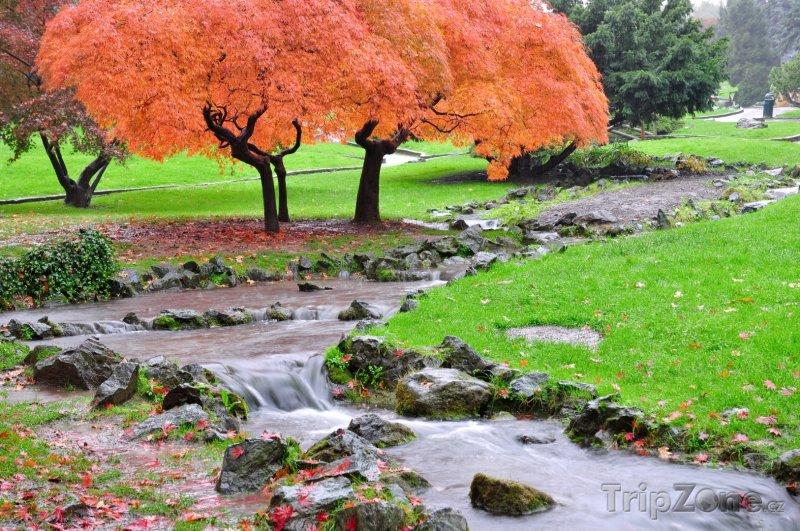 Fotka, Foto Podzimní botanická zaharada (Turín, Itálie)