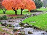 Podzimní botanická zaharada