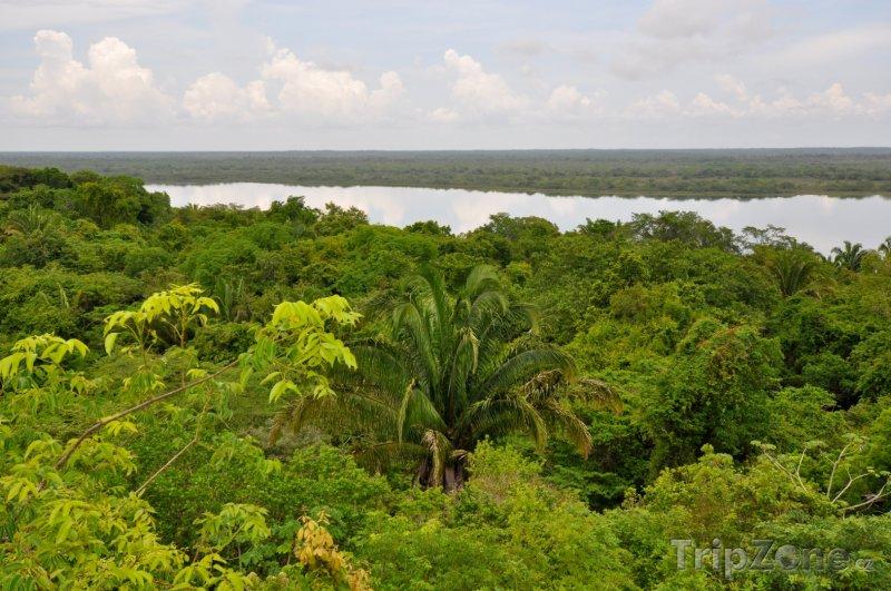 Fotka, Foto Pohled na deštný prales v Belize (Belize)