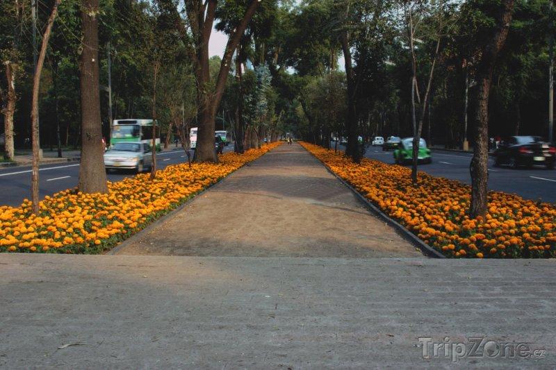Fotka, Foto Reforma Avenue (Mexico City, Mexiko)