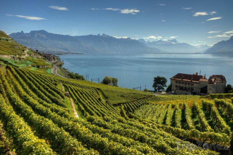 Fotka, Foto Vinice Lavaux (Švýcarsko)
