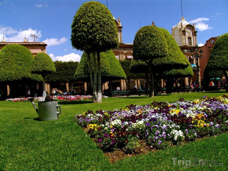 Fotka, Foto Zahrady vedle náměstí Zócalo (Mexico City, Mexiko)