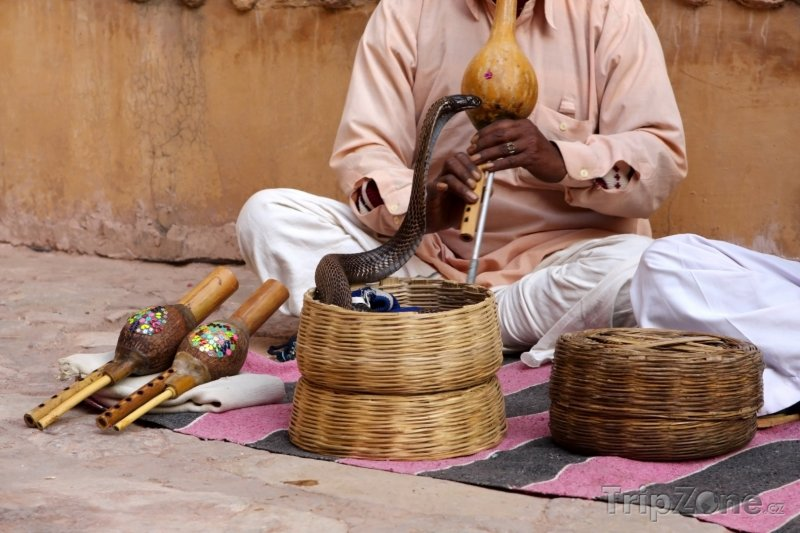 Fotka, Foto Zaklínač hadů při svém vystoupení (Nové Dillí, Indie)