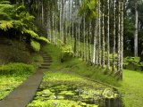 Botanická zahrada Jardin de Balata