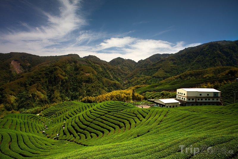 Fotka, Foto Čajová zahrada Ba Gua (Tchaj-wan)