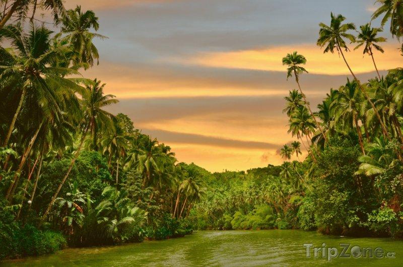 Fotka, Foto Deštný prales (Filipíny)
