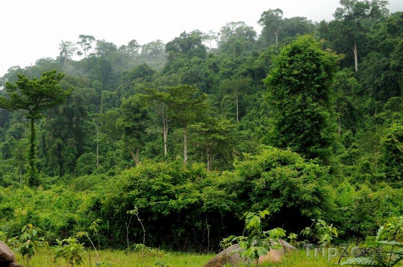 Fotka, Foto Deštný prales (Kambodža)