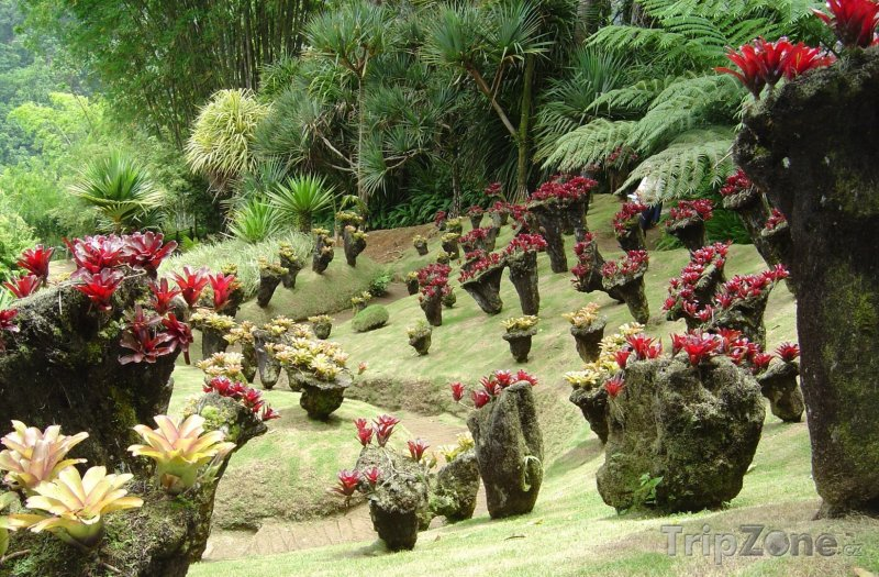 Fotka, Foto Kaktusy (Martinik)