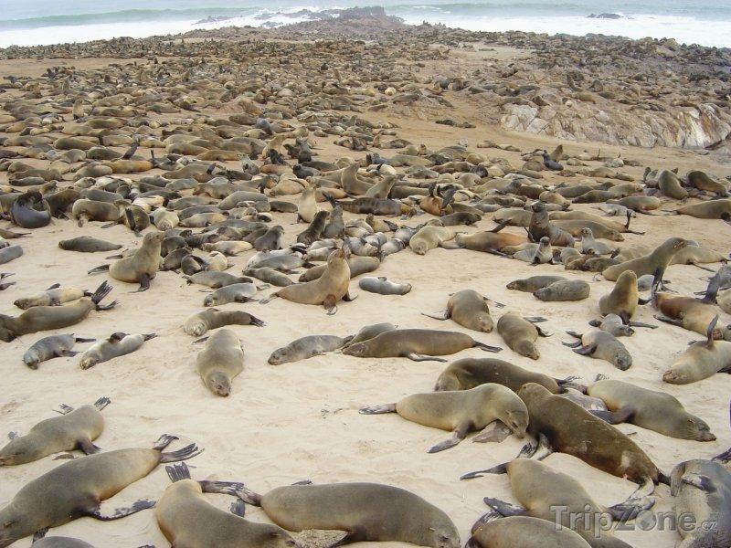 Fotka, Foto Kolonie tuleňů na pláži v Cape Cross (Namibie)