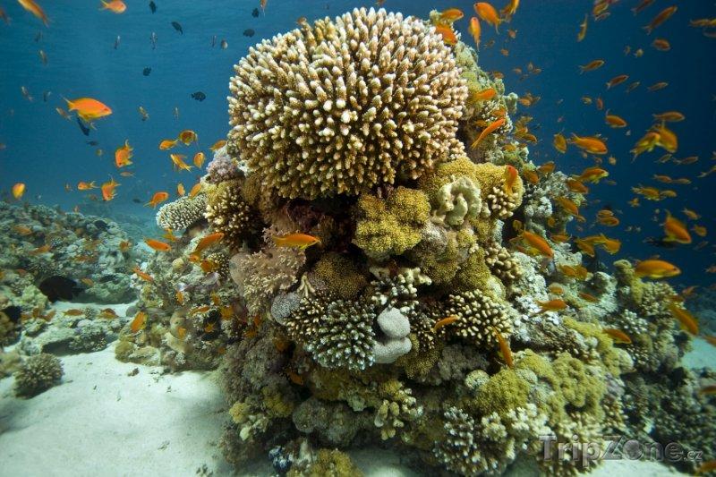 Fotka, Foto Korálový útes u pobřeží (Ejlat, Izrael)