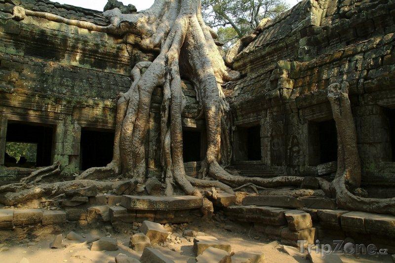 Fotka, Foto Kořeny stromu na ruinách v chrámu Angkor Vat (Kambodža)