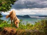 Kůň nad jezerem Taal