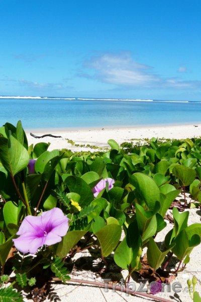 Fotka, Foto Květiny na pláži (Réunion)