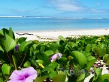 Květiny na pláži