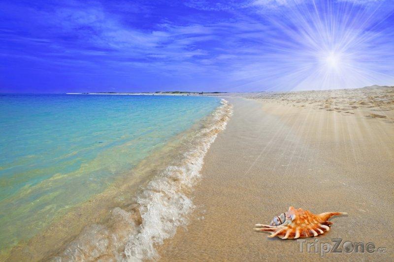 Fotka, Foto Lastura na pláži Boca Grandi Beach (Aruba)